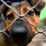 กลุ่มสิทธิสัตว์รัฐนากาแลนด์ เรียกร้องและสั่งห้ามการค้าขายเนื้อสุนัข