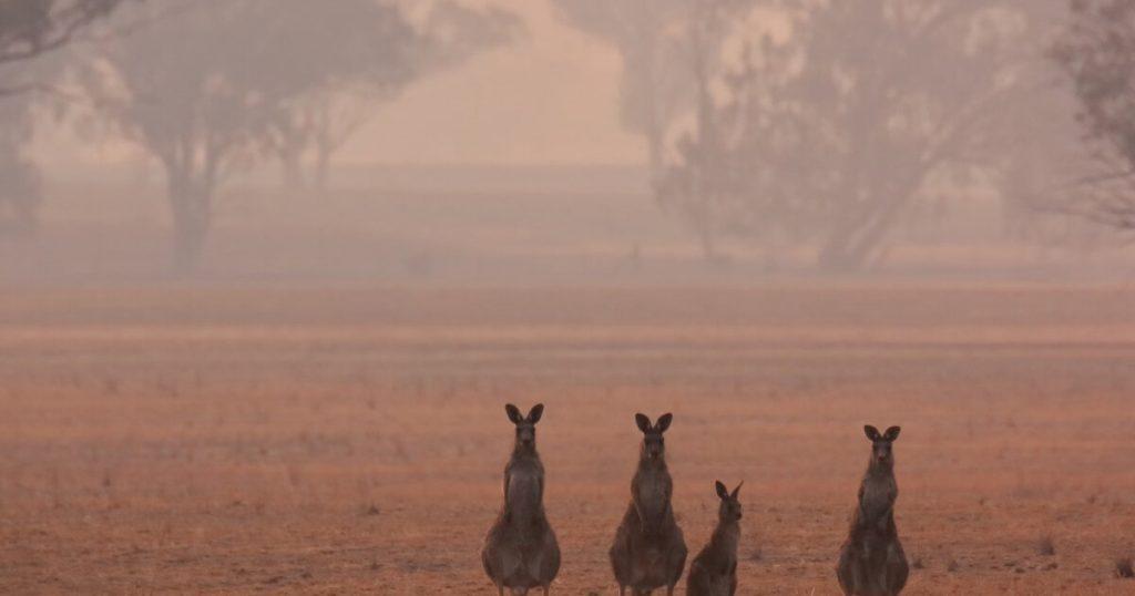 ออสเตรเลีย ต้องเตรียมพร้อมสำหรับภัยพิบัต ออสเตรเลียต้องเตรียมพร้อมสำหรับอนาคตที่น่าตกใจจากภัยธรรมชาติที่เลวร้ายลงพร้อม ๆ กันรายงานที่รอคอย